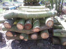 Pin up logs – week 15