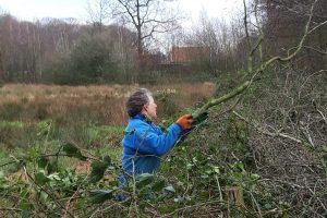 Forest work: week 4