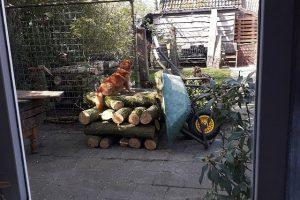 Logs at home: week 18