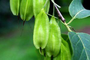 Food forests: week 27
