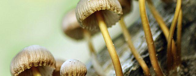 Fantastic Fungi: week 31